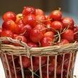 29年度産:佐藤錦(C)【収穫量約30Kg】「さくらんぼの木」オーナー募集!