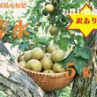 8月:【予約】無化学肥料栽培!宮城県産ブランド和梨(幸水)5kg:訳あり/送料無料