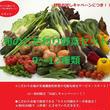 【お試し】【初めての方限定!】「おためしセット」Lサイズ(旬の「栄養こだわり野菜」9~12種類)