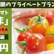 栄養こだわり野菜「にこトマト:ミニトマトMIX(赤/黄)【業務用】3Kg/箱」