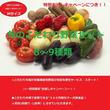 【お試し】【初めての方限定!】「おためしセット」Mサイズ(旬の「栄養こだわり野菜」8~9種類)