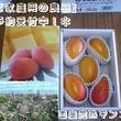 【ご家庭用の良品/4玉入り】*予約受付中!*【沖縄県名護産】国産完熟マンゴー2kg/箱