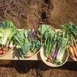 野菜セットL 2回分(送料込)