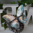 蝶のマグネット メネラウスモルフォ  corrosive Lsize 試作