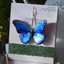 蝶のピアス メネラウスモルフォblue&red.col 2Ssize (両面、片耳用)