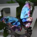 蝶のマグネット メネラウスモルフォ  Turquoise erosion Lsize ①