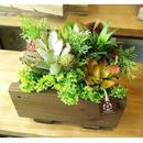 5400円(税抜) 多肉植物の寄せ植え