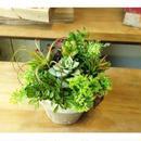 4800円 多肉植物の素焼き鉢