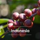 インドネシア オナンガンジャン 200g