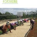 ケニア キウニュAA  100g