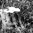 JULIE's Photo Monochrome-36