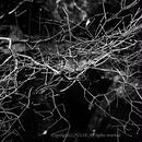JULIE's Photo Monochrome-242