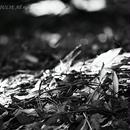 JULIE's Photo Monochrome-202