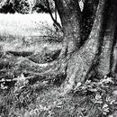 JULIE's Photo Monochrome-50