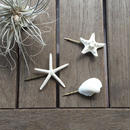 Sea hair pin