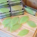 DESIGN IDEAS SOAP LEAVES GREEN / WHITE