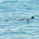 sea turtles of holiday