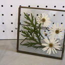 flower Photo flame = 置き型 square marguerite =