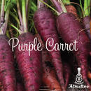 鮮やかな紫色の人参コズミックパープルキャロットの種