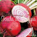 イタリア野菜テーブルビート(トンダ デ チオッギア)の種