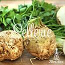 珍しい西洋野菜の根セロリ(セロリアック)の種