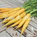 イタリア野菜の黄人参ジャンヌドウブスの種