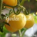 桃のようにかわいい甘味が強くさわやかな味わい/ガーデンピーチトマトの種