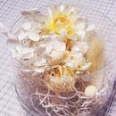 【おまかせオフホワイト系】ハーバリウム花材セット