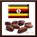 310224 / ウガンダ産カカオ豆 / 1.5㎏