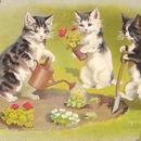 お花の苗を植える猫ちゃん達のポストカード