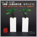 土なし清潔水やり簡単 【神棚・仏壇お供え用植物】 ナギの木 2個セット 白容器