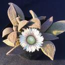 トランスバーレンシス   Nananthus transvaalensis (091)