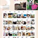 2019年ワンコ&ニャンコ365カレンダー