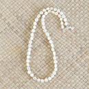 シェルパーツ × カレンシルバー ネックレス (a)