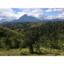 グアテマラ ジャスミン農園 500g