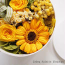 Coffret Collection/Citrus Yellow