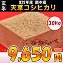 【玄米】H29年産 熊本産 天草コシヒカリ 30kg