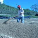 中米 ニカラグア パブロベラスケス農園/Pablo Velasques