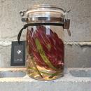 Lab bottle plants 1ℓ (protea venus)