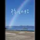 映画『弥生の虹』パンフレット