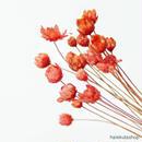 «20本セット» カスミソウ 押し花 レジン ネイル素材 紅色 赤 7#