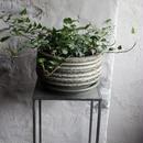 アイビー ティアドロップ indoor Plants  M size 現品