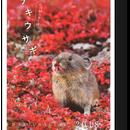 氷河期の生き残り ナキウサギ2018 カレンダー