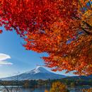 河口湖の紅葉と富士山[富士河口湖町]