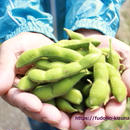 あけぼの大豆 枝豆 4キロ 予約 250g×16