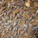 活き餌:ホソワラジムシ(50匹)