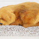Dream Pets ブラウン レトリバー 活性炭入り脱臭効果  国内未発売