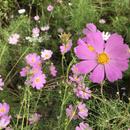 【リンク 花・空】自然界の写真を紹介します