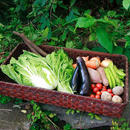 【無農薬・無化学肥料】単発お野菜セット 2400円 2~3人分