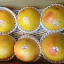 ルビーグレープ フルーツ6玉